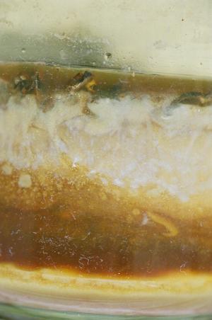 Bild von Ottilie (verschimmelte Milch), Detail